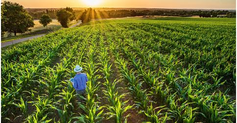 empleos de invervento temporal en Recluta agro
